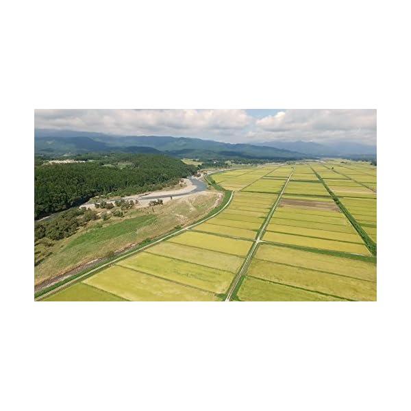 【精米】栃木県産 無洗米 コシヒカリ 平成27年産の紹介画像4
