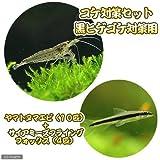 (熱帯魚)(エビ)コケ対策セット 黒髭ゴケ対策 ヤマトヌマエビ(10匹)+サイアミーズフライングフォックス(4匹)