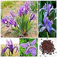 SEEDS PLAT会社 - 中国のアイリス種子50個/バッグブルー美しい花多年草ホームガーデン盆栽花DIYポット花の種