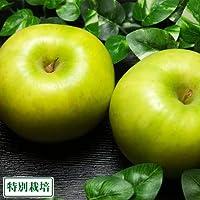 りんご 青林 A品 10kg 箱 特別栽培 (青森県 田村りんご農園) 産地直送 ふるさと21
