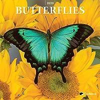 "Goldistock 2020 大型壁掛けカレンダー -""Butterflies"" - 12インチ x 24インチ (開いた状態) - 厚くて丈夫な紙 - インスピレーションと美しい"