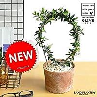 LAND PLANTS!! オリーブ アーチ仕立て モスポット鉢に植えた 卓上サイズの オリーブの木