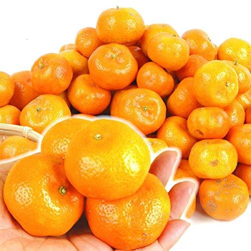 国華園 沖縄産 黄金シークヮーサー 5kg1箱 シークワーサー 柑橘