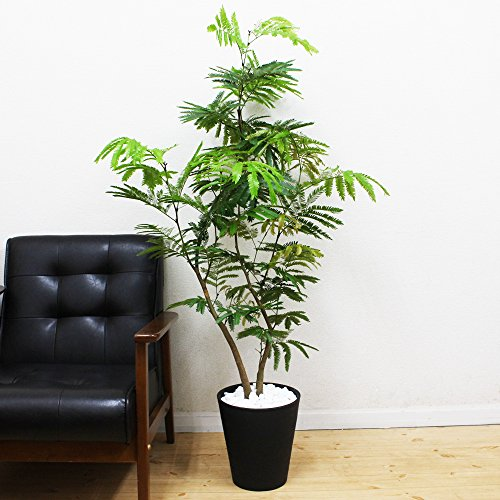 エバーフレッシュ 観葉植物 インテリア ブラックセラアート鉢 8号 大型 中型