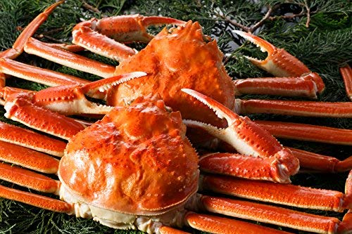 食の達人森源商店 姿ズワイガニ 高級カナダ産 中サイズ ボイル済み 2尾セット 訳あり カニ かに 蟹 味噌