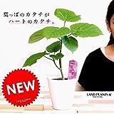 LAND PLANTS お試しサイズ ウンベラータ 4号 卓上サイズ