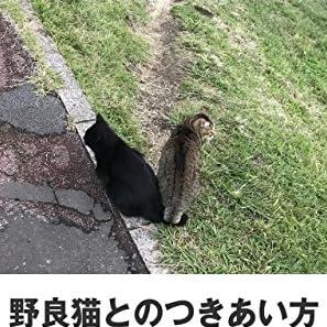 野良猫とのつきあい方・飼い方