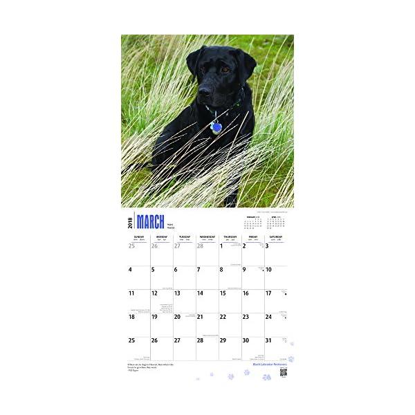 Black Labrador Retrieve...の紹介画像3