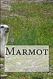 マーモット Marmot