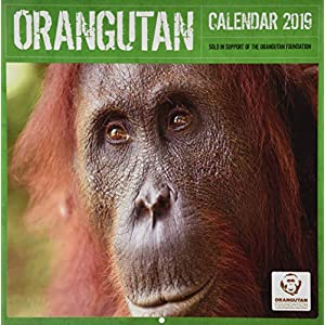 Orangutan - Orang-Utans 2019: Original Carousel-Kalender