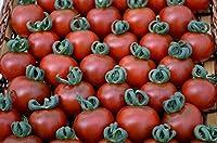 HIGH発芽SEEDSだけでなくPLANTS:野菜トマトガーネット20個の最高級の種子