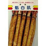 ごぼう 種 【アサヒ魁白肌】 小袋(約10ml)