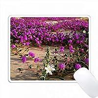 アメリカ、カリフォルニア州、アンザボレゴ砂漠SP。砂漠の野生の花。 PC Mouse Pad パソコン マウスパッド