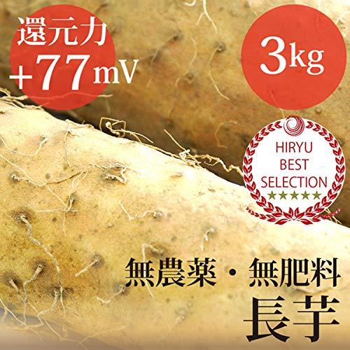 長芋 3kg 自然栽培(無農薬・無肥料)