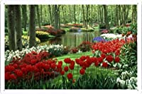 チューリップ水仙観賞湖木ガーデンキューケンホフオランダビューティー21984 の金属看板 ティンサイン ポスター / Tin Sign Metal Poster of Tulips Daffodils Ornamental Lake Trees Garden Keukenhof Netherlands Beauty 21984