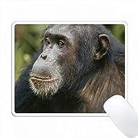 タンザニア、ゴンベ・ストリーム国立公園、男性チンパンジー。 PC Mouse Pad パソコン マウスパッド