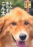 福島 余命1カ月の被災犬 とんがりあたまのごん太
