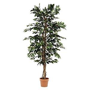 不二貿易 観葉植物 フィカス A 高さ170cm グリーン 52662
