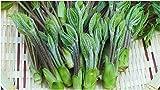 【国産 天然】最高級品質(蕾・つぼみ・筆・ふで)山菜の女王 コシアブラ 100g 採りたてを産直。天ぷらに最適