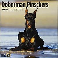 Doberman Pinschers 2019 (BREEDS)