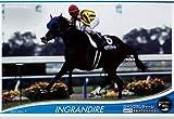 オーナーズホース/OWNERS HORSE【イングランディーレ】OH02-H061