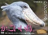 千葉市動物公園 'ハシビロコウ'