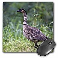 3drose NeneハワイアンGoose、鳥、カウアイ島、ハワイ、アメリカ–us12dfr0128–マウスパッド、8× 8インチ(MP 143904_ 1)