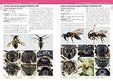 日本産ハナバチ図鑑 画像