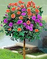 50ピースローズシードフラワーシード美しいローズシードシード多年生の花びらシードホームポット用植木鉢:4