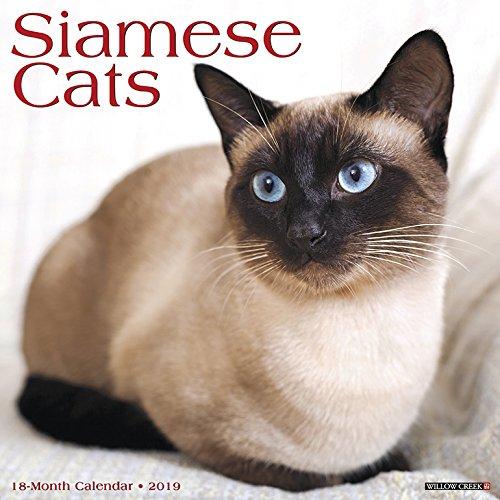 Siamese Cats 2019 Calendar