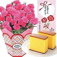 花のギフト社 母の日 カーネーション 文明堂 カステラ 花とスイーツ 鉢花 花 鉢花ギフト 5号鉢