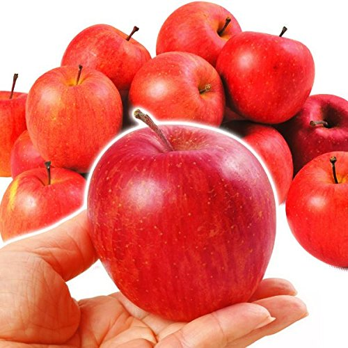 国華園 青森産 ご家庭用 ちびふじ 10kg1箱 林檎【2018年度新物】 りんご