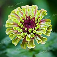 100 Pcs mixed color Zinnia Seeds, Bonsai Potted flower seeds, Rare Spring Flowers plants for home garden
