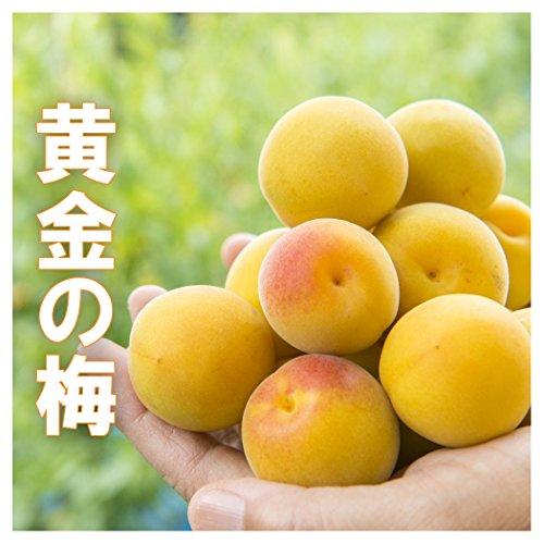 ご予約品 樹上 完熟梅 黄金の梅 3kg 生梅 梅干し用 梅酒用 完熟梅 福井 木成 完熟梅