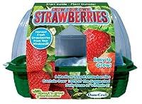 DuneCraft Sprout 'n Grow Greenhouses Strawberries [並行輸入品]
