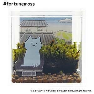 Fortune Moss まめねこ (だいず)