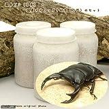 (昆虫)国産オオクワガタ幼虫(3匹) + 菌糸瓶 XL-POT ヒラタケ 800cc 3本 説明書付 本州・四国限定[生体]