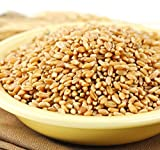 Wheat Montana Prairie Gold Hard White Spring Wheat Berries, 25 Lb. Bag by Prairie Gold [並行輸入品]