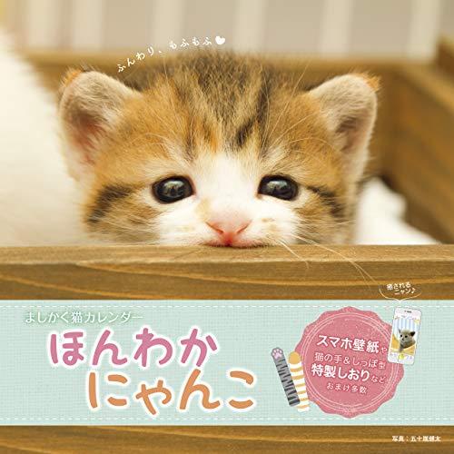 ましかく猫カレンダー ほんわかにゃんこ (インプレスカレンダー2019)