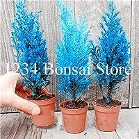 SEEDS:20本の木盆栽針葉樹プランタ、エバーグリーンランド工場、家の庭のための100%真の盆栽鉢植え:11
