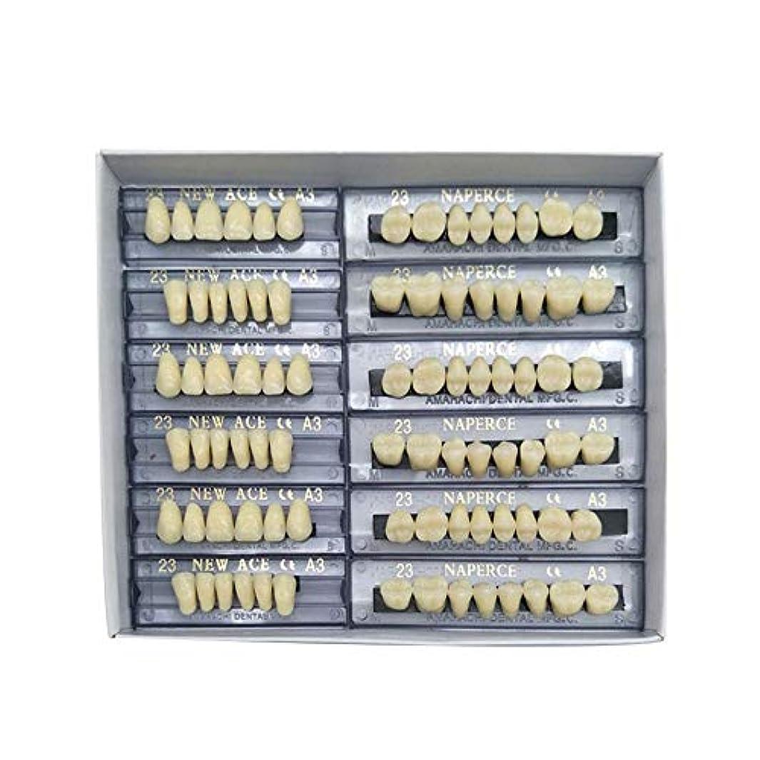 工夫するアクセス苗SHINA 12セット合成ポリマー樹脂義歯 上+下歯科セット (A3)