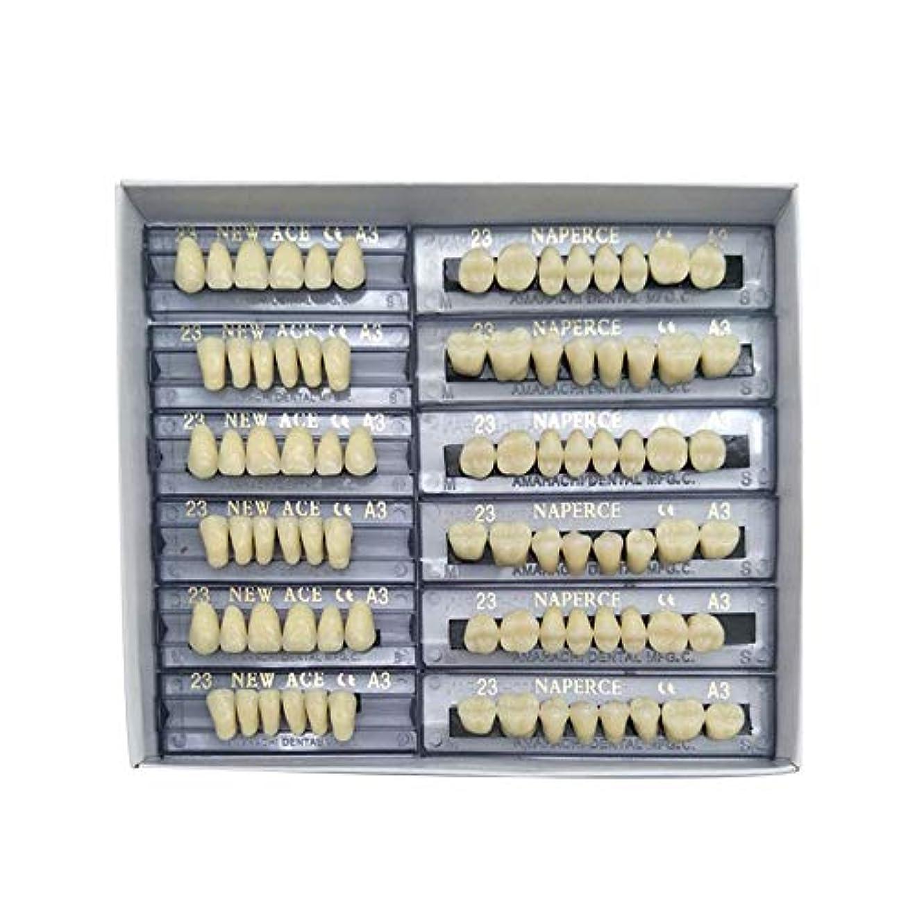 バーマドソフトウェア透けるSHINA 12セット合成ポリマー樹脂義歯 上+下歯科セット (A3)