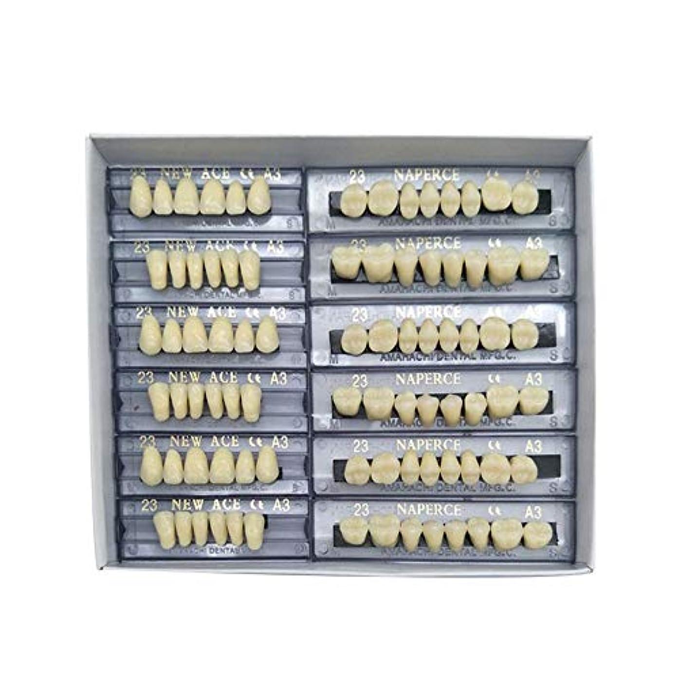 事前に権限そよ風SHINA 12セット合成ポリマー樹脂義歯 上+下歯科セット (A3)