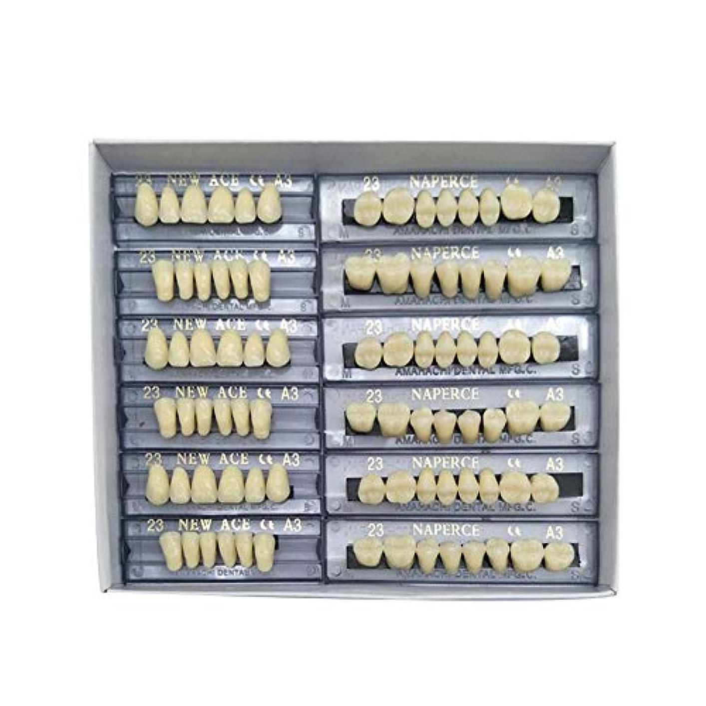 デンプシー雷雨排他的SHINA 12セット合成ポリマー樹脂義歯 上+下歯科セット (A3)