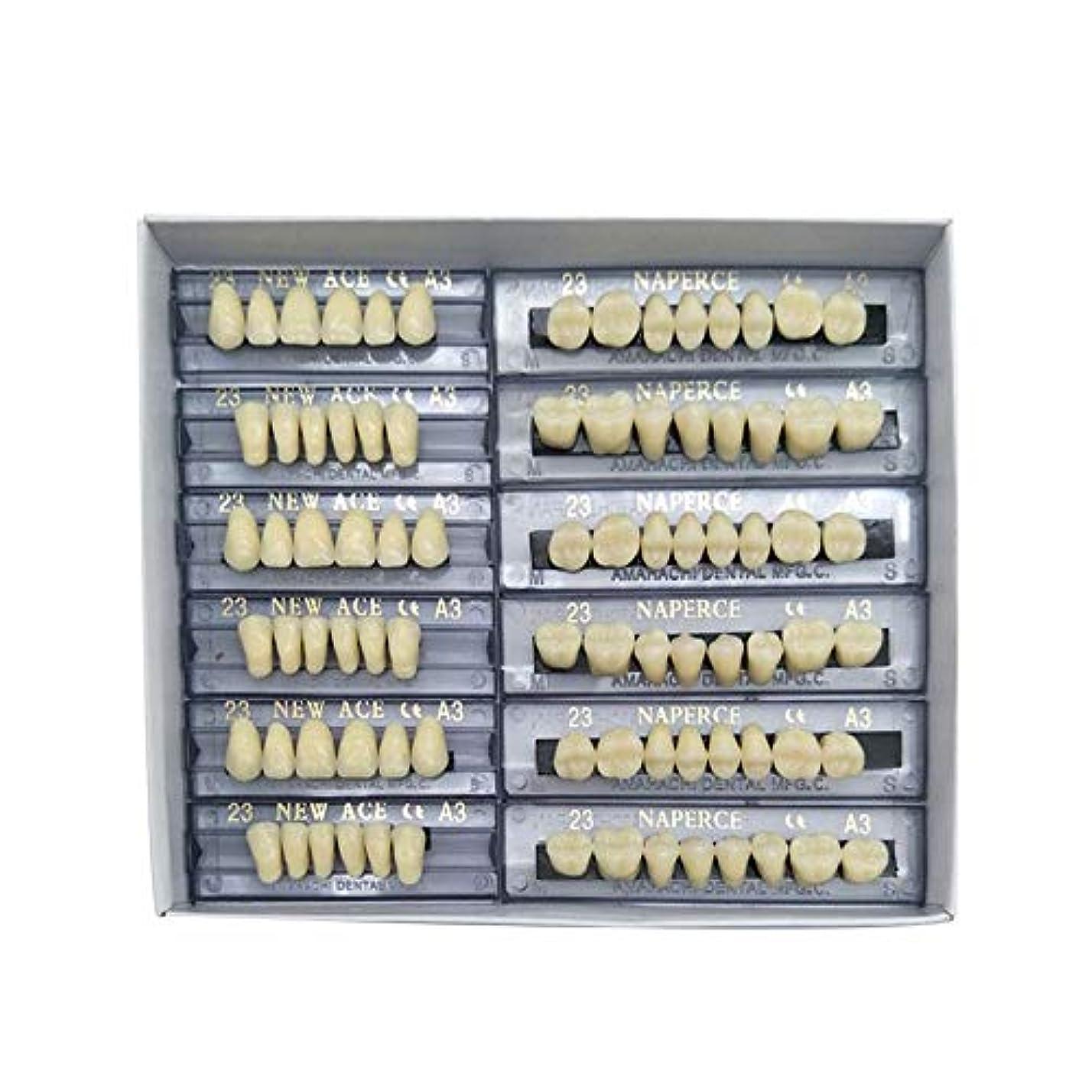 ホイール魅力的素人SHINA 12セット合成ポリマー樹脂義歯 上+下歯科セット (A3)
