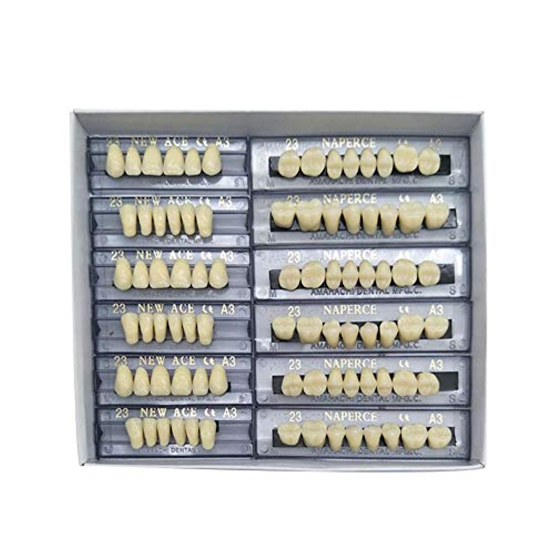 泣く欠席コーラスSHINA 12セット合成ポリマー樹脂義歯 上+下歯科セット (A3)
