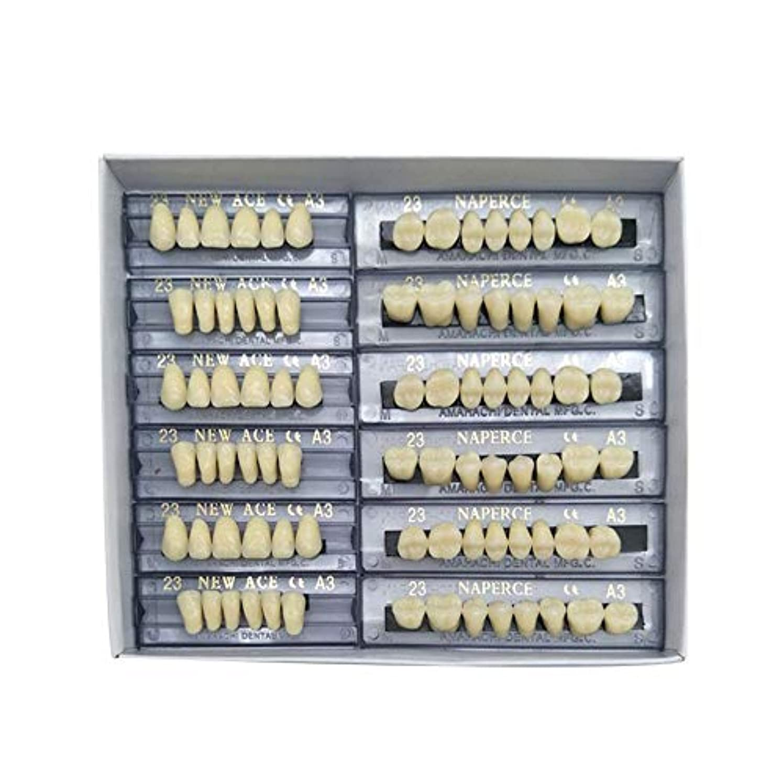 SHINA 12セット合成ポリマー樹脂義歯 上+下歯科セット (A3)
