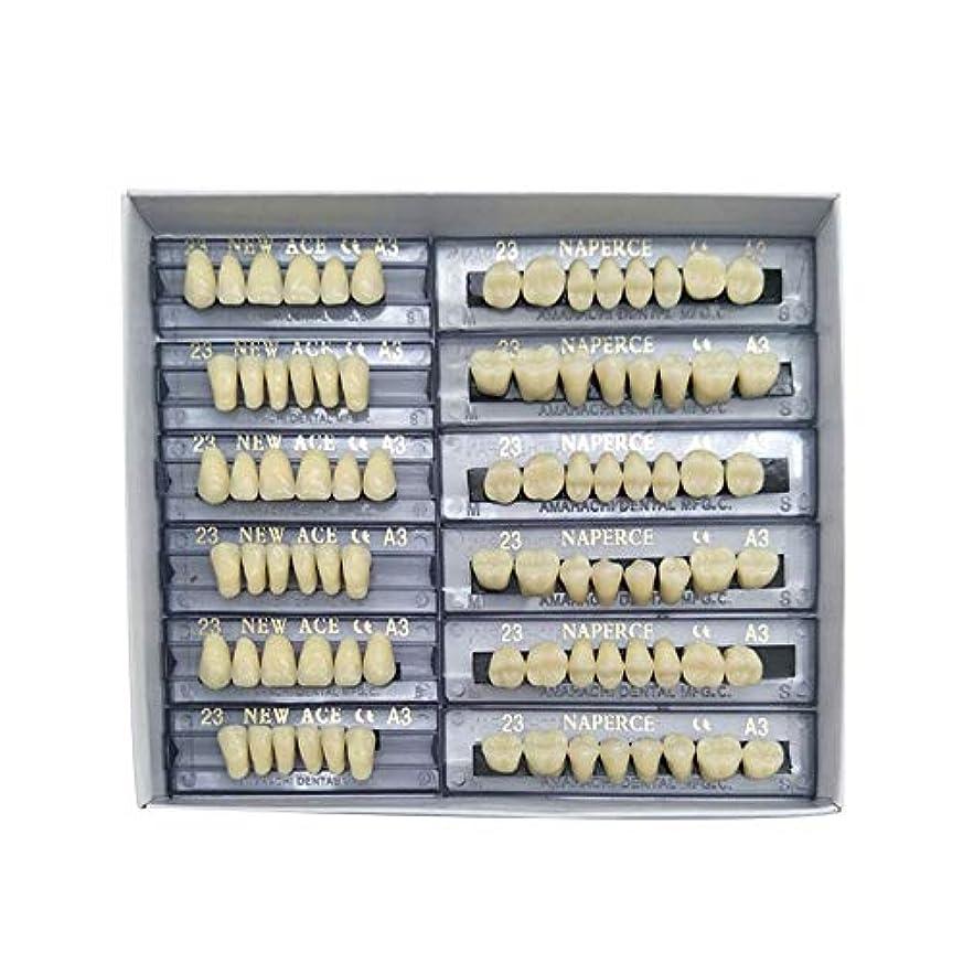 雄弁家設計図セッションSHINA 12セット合成ポリマー樹脂義歯 上+下歯科セット (A3)