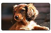 ダックスフント、犬、子犬、日 パターンカスタムの マウスパッド 動物 デスクマット 大 (60cmx35cm)