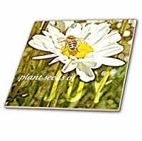 Patricia Sanders花 – Daisy and Bee Plant Seeds of joy- flowers-花アート – タイル 12-Inch-Ceramic ct_44698_4